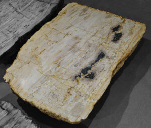 Table basse bois pétrifié 12094