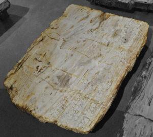 Table basse bois pétrifié 12097