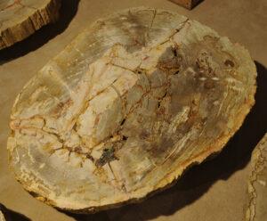 Table basse bois pétrifié 13173