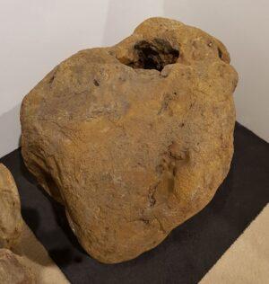 Pierre tombale bois pétrifié 12019