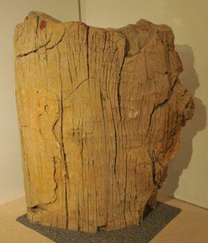Pierre tombale bois pétrifié 12022