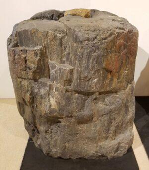 Pierre tombale bois pétrifié 13038