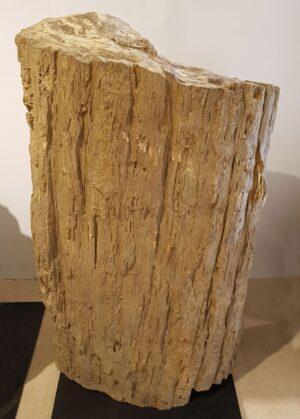 Pierre tombale bois pétrifié 13062