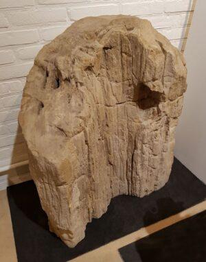 Pierre tombale bois pétrifié 15000