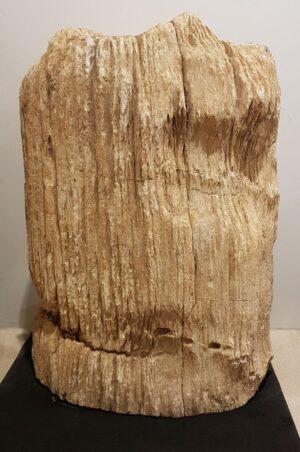 Pierre tombale bois pétrifié 17007