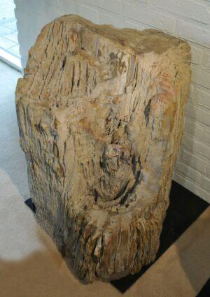 Pierre tombale bois pétrifié 19036