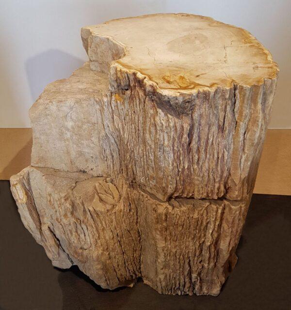 Pierre tombale bois pétrifié 24010