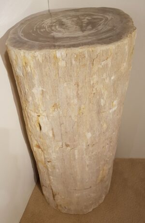 Pierre tombale bois pétrifié 24023