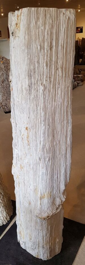 Pierre tombale bois pétrifié 25238