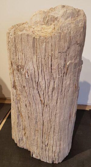 Pierre tombale bois pétrifié 27603
