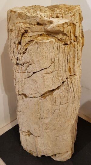 Pierre tombale bois pétrifié 27606