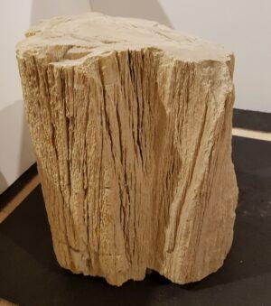 Pierre tombale bois pétrifié 27637