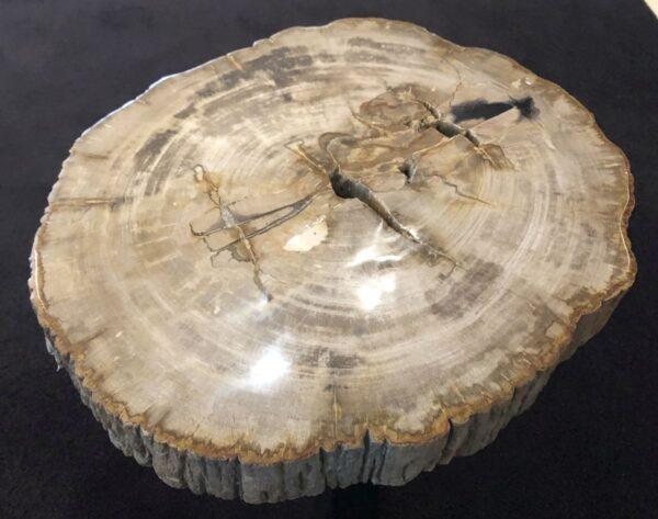 Table basse bois pétrifié 31150