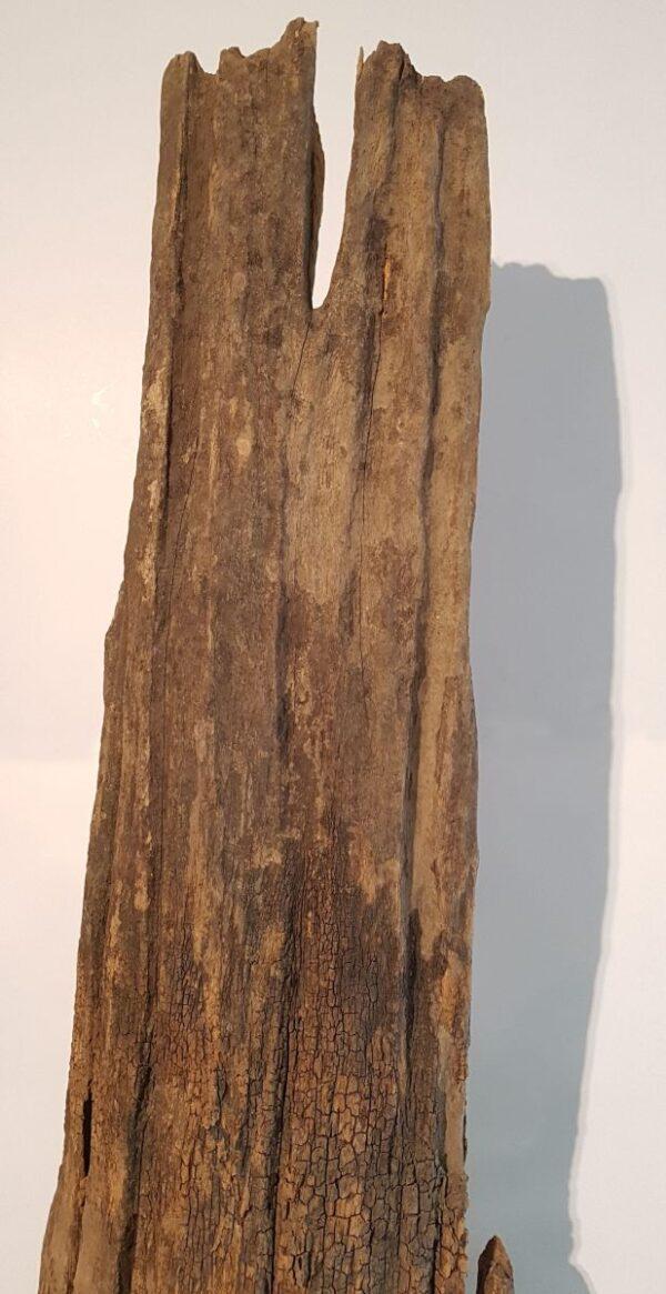 Treibholz 11616