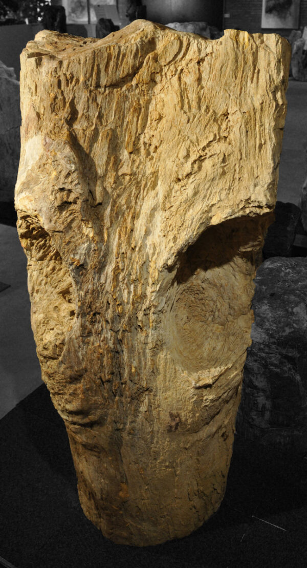 Lápida madera petrificada 13003