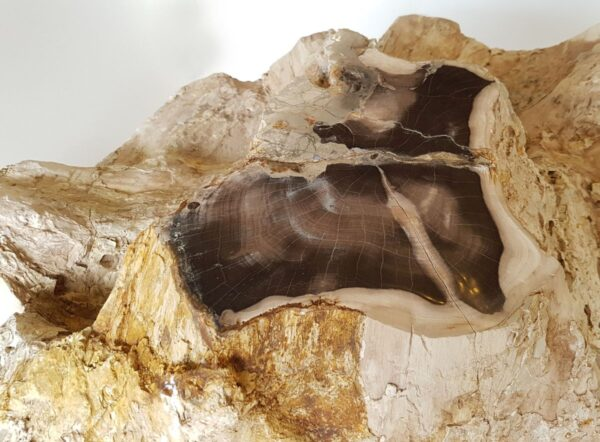 Lápida madera petrificada 19042