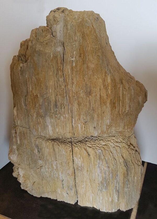 Lápida madera petrificada 19045