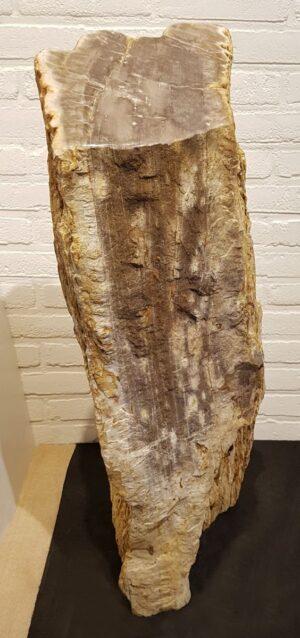 Lápida madera petrificada 19089