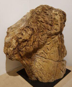 Lápida madera petrificada 21391