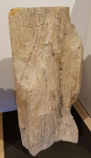 Lápida madera petrificada 22290