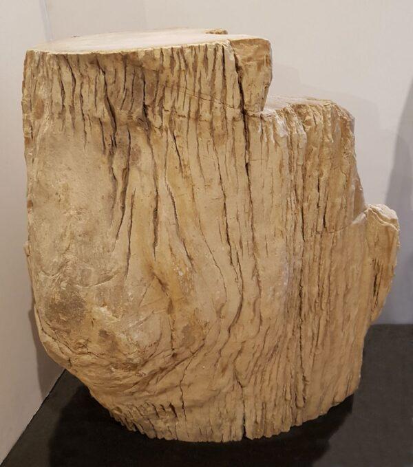 Lápida madera petrificada 24010