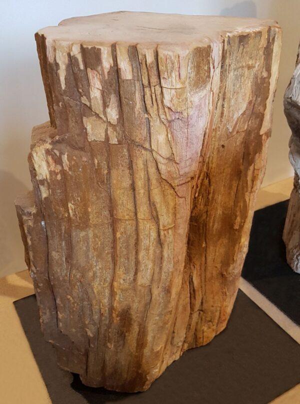 Lápida madera petrificada 24050