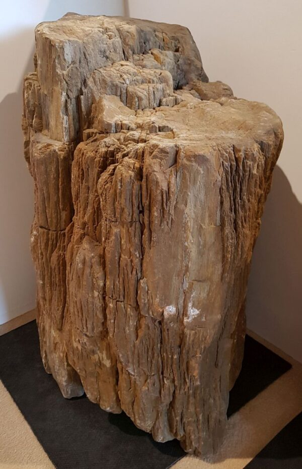 Lápida madera petrificada 24158