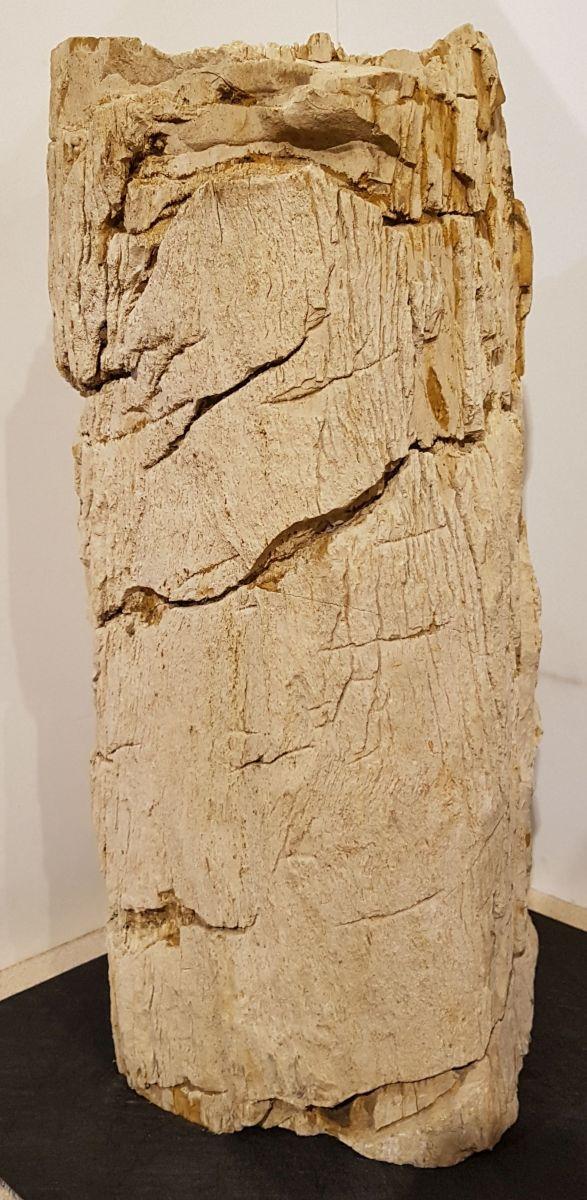 Lápida madera petrificada 27606