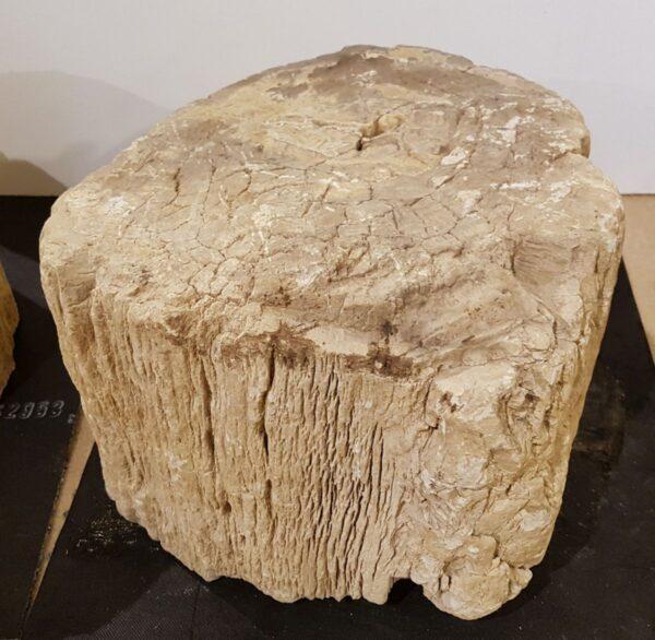 Lápida madera petrificada 27635