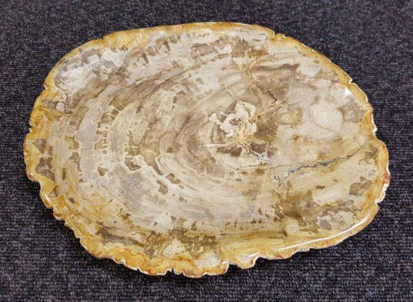 Plato madera petrificada 22097