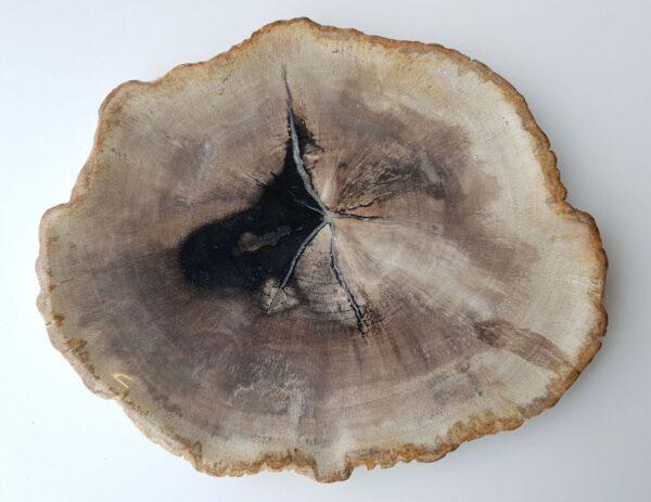 Plato madera petrificada 28082