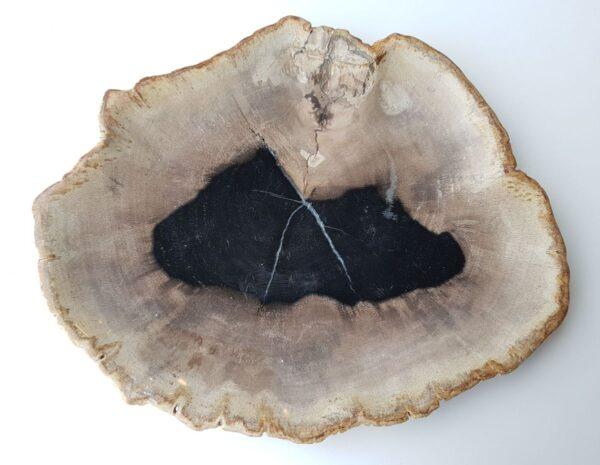 Plato madera petrificada 28087