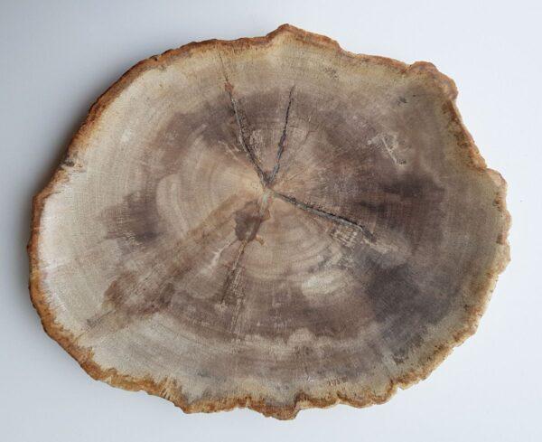 Plato madera petrificada 28089