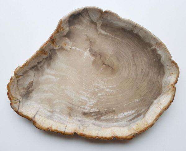 Plato madera petrificada 28157