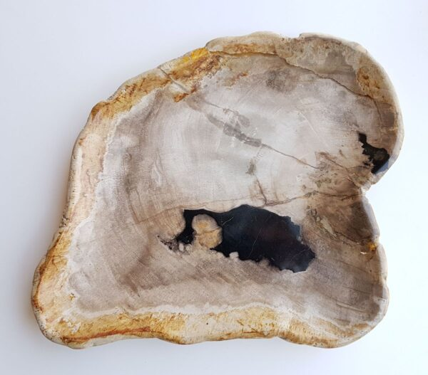 Plato madera petrificada 29385