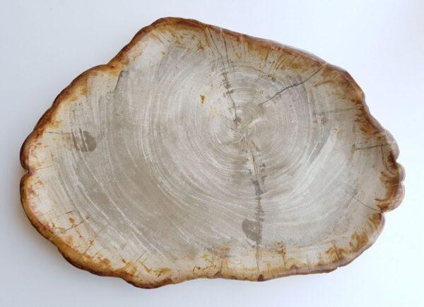 Plato madera petrificada 29386
