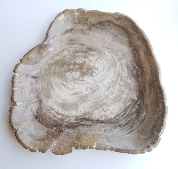 Plato madera petrificada 29389