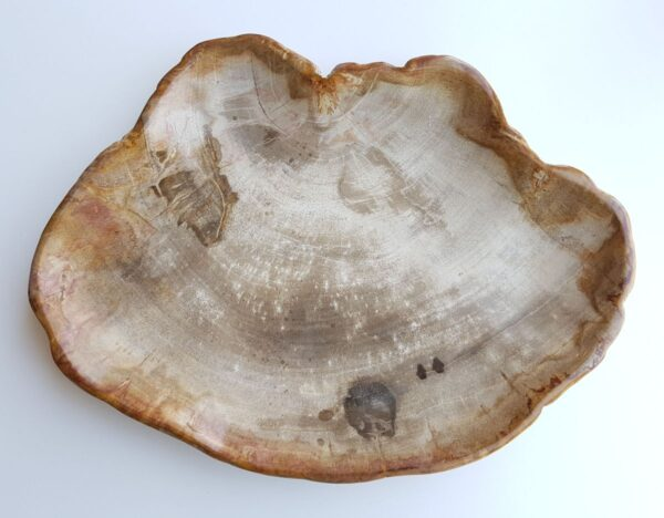 Plato madera petrificada 29439
