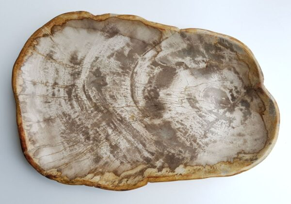 Plato madera petrificada 29455