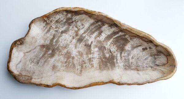 Plato madera petrificada 29457