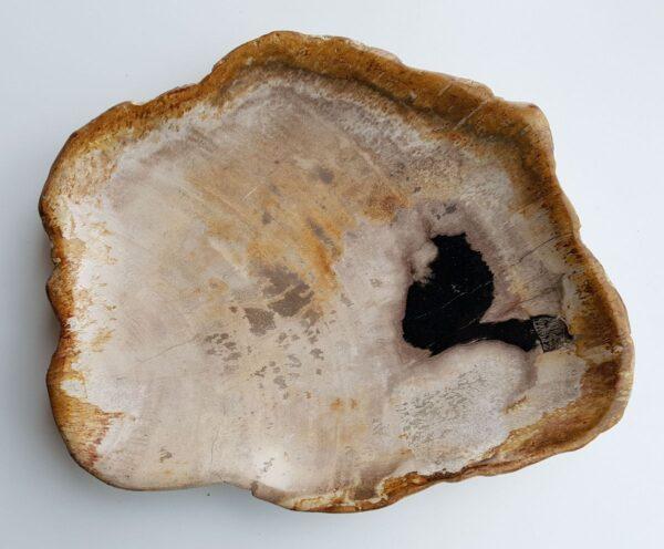 Plato madera petrificada 29499