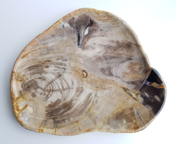 Plato madera petrificada 29511