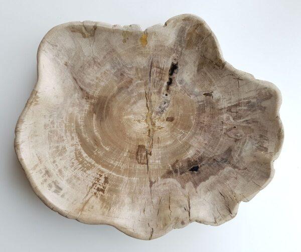 Plato madera petrificada 29517