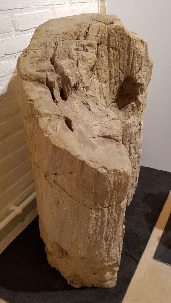 Lapide legno pietrificato 15000