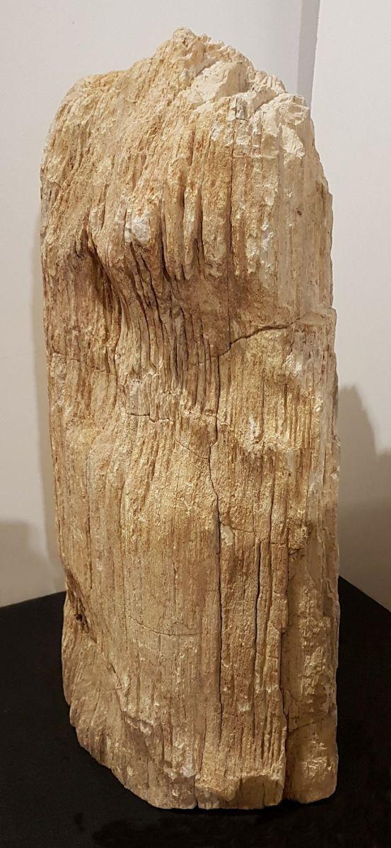 Lapide legno pietrificato 17007