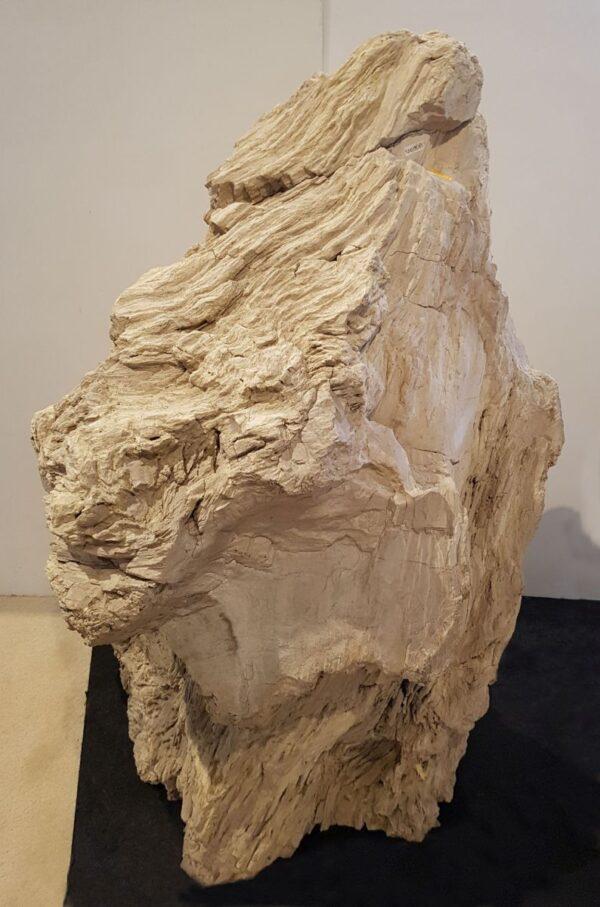Lapide legno pietrificato 19027