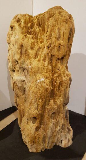 Lapide legno pietrificato 21394