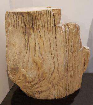 Lapide legno pietrificato 24010