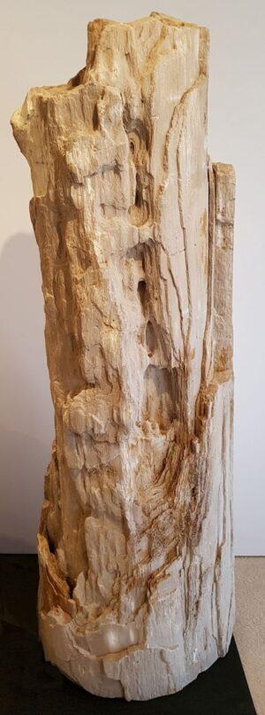 Memorial stone petrified wood 24096