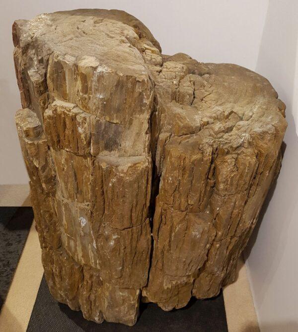 Lapide legno pietrificato 24158